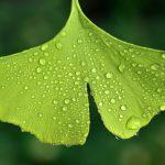 Pourquoi les plantes sont-elles utilisées pour soigner les hommes ?